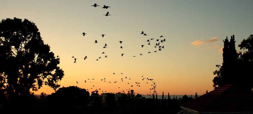 Birds flying in the sky, trees, sun is setting