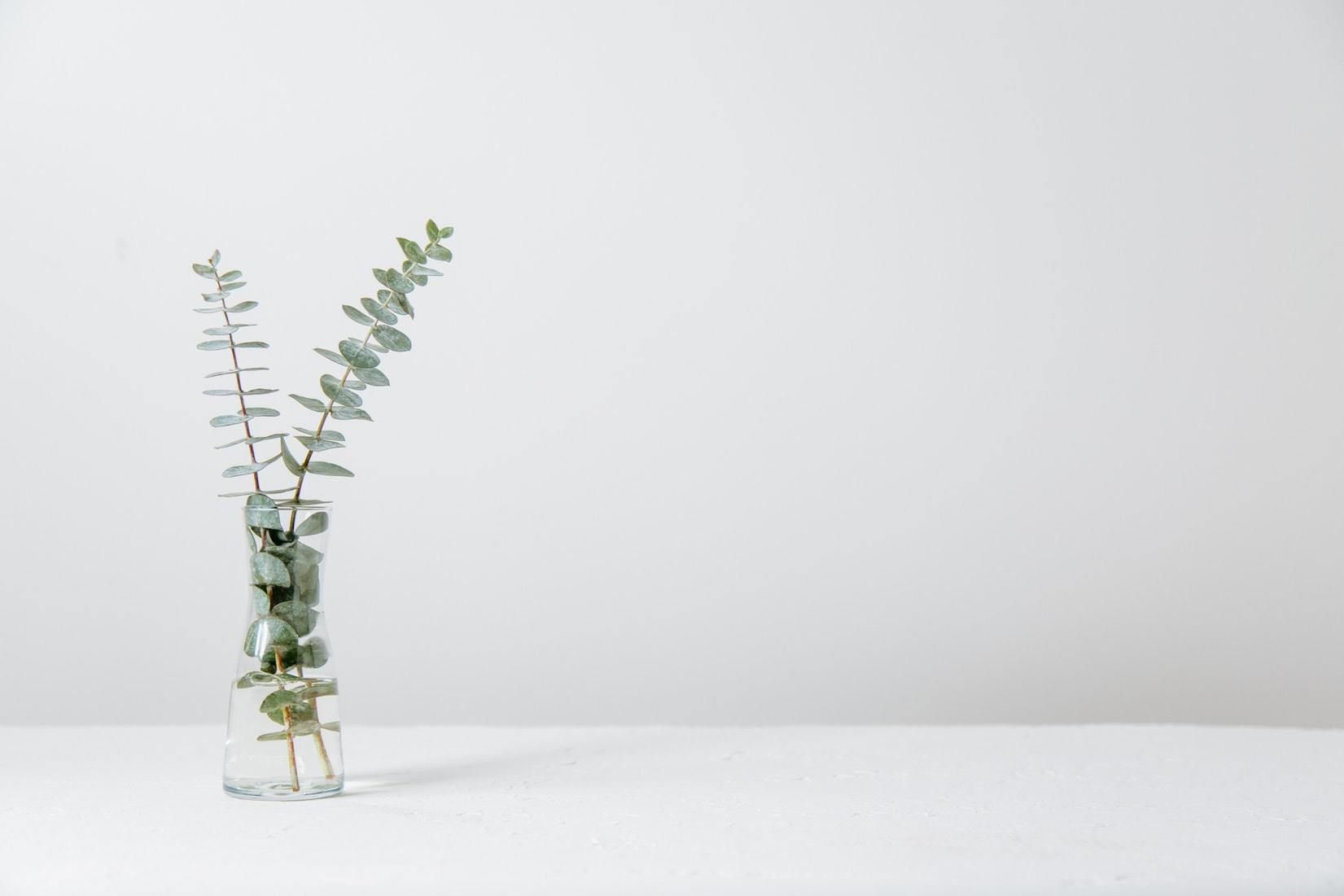 A single plant against a white background symoblising the peace therapy and counselling can bring